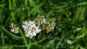 Ladybug May 7